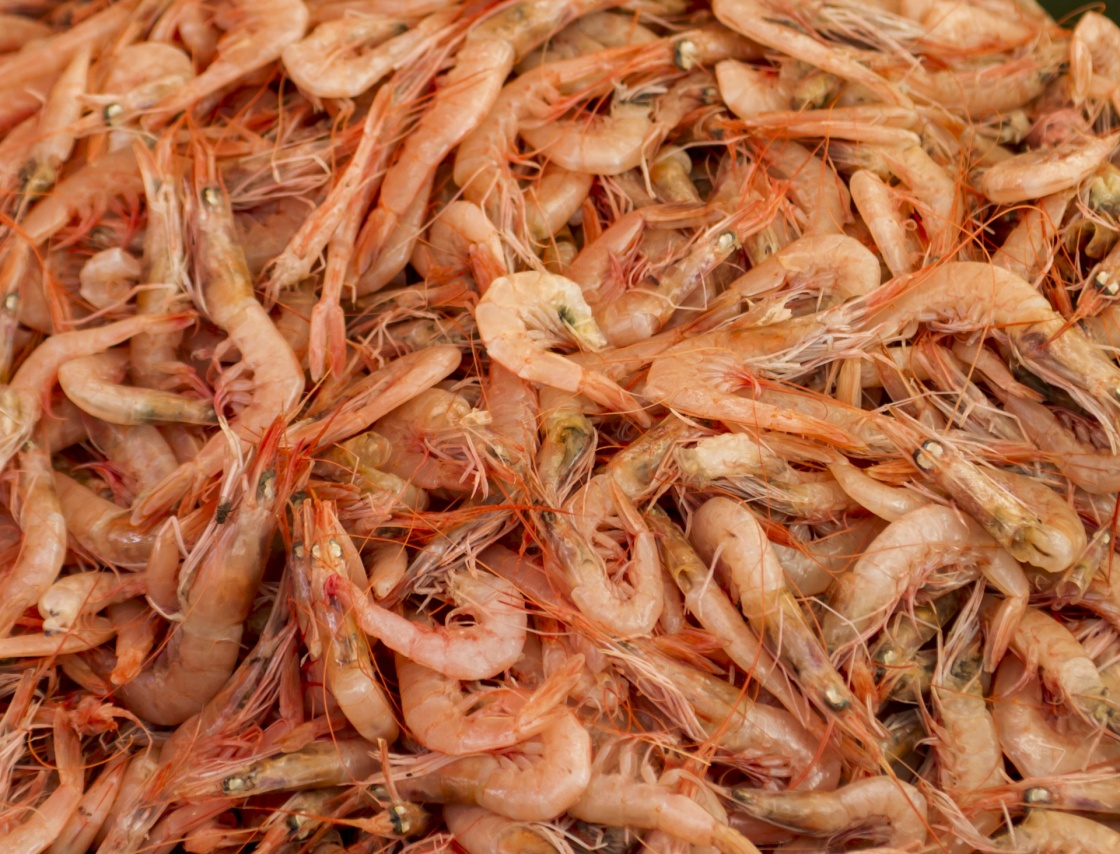 'Fresh shrimps in the fish market' - Split